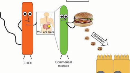 cartoon explanation of digestion