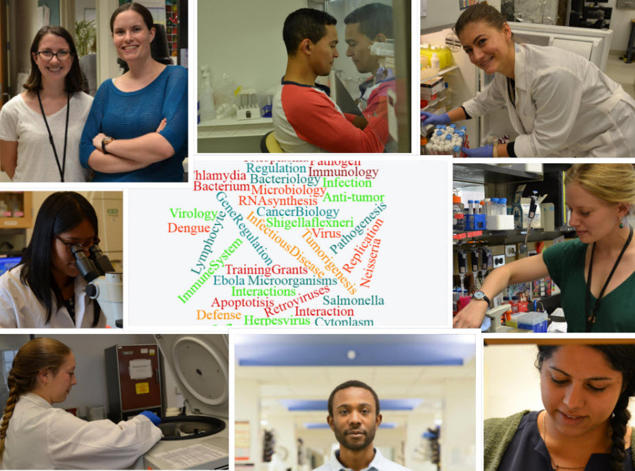 collage of 9 students at fume hood, putting tubes in refrigerator, at microscope, at centrifuge in research labs